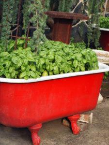 re-purpose a bathtub as a container garden